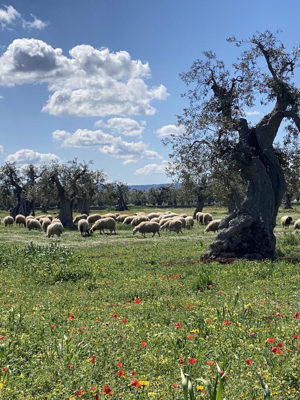 Farm in Puglia