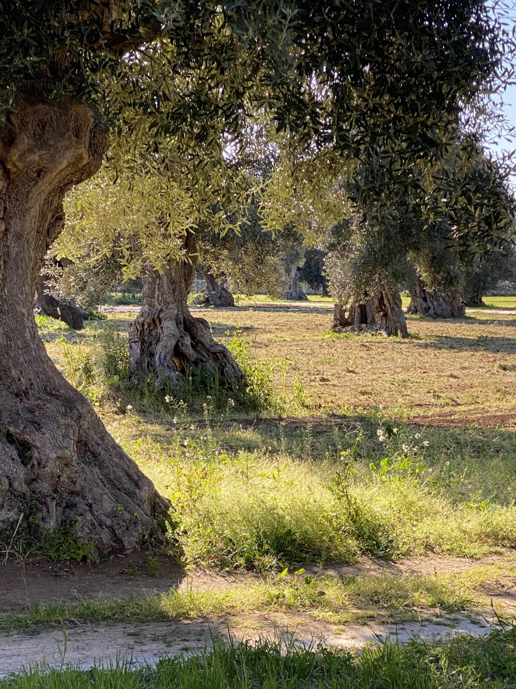 Puglia - A region of farmers, of traditions, of passion, of simplicity.