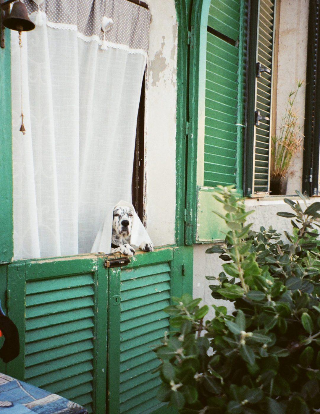 Bari - Someone's Backyard