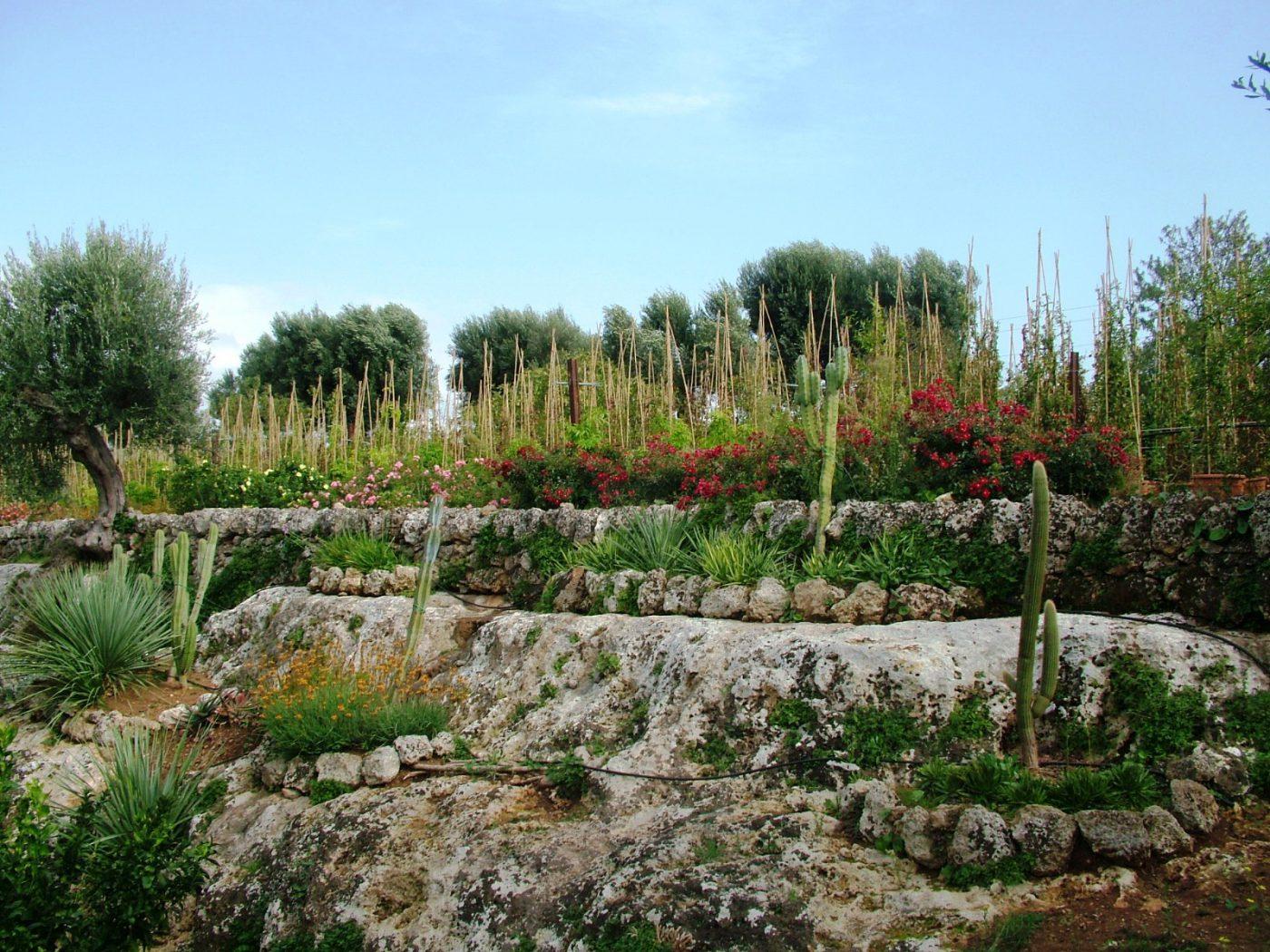 Puglia - Lama degli Ulivi