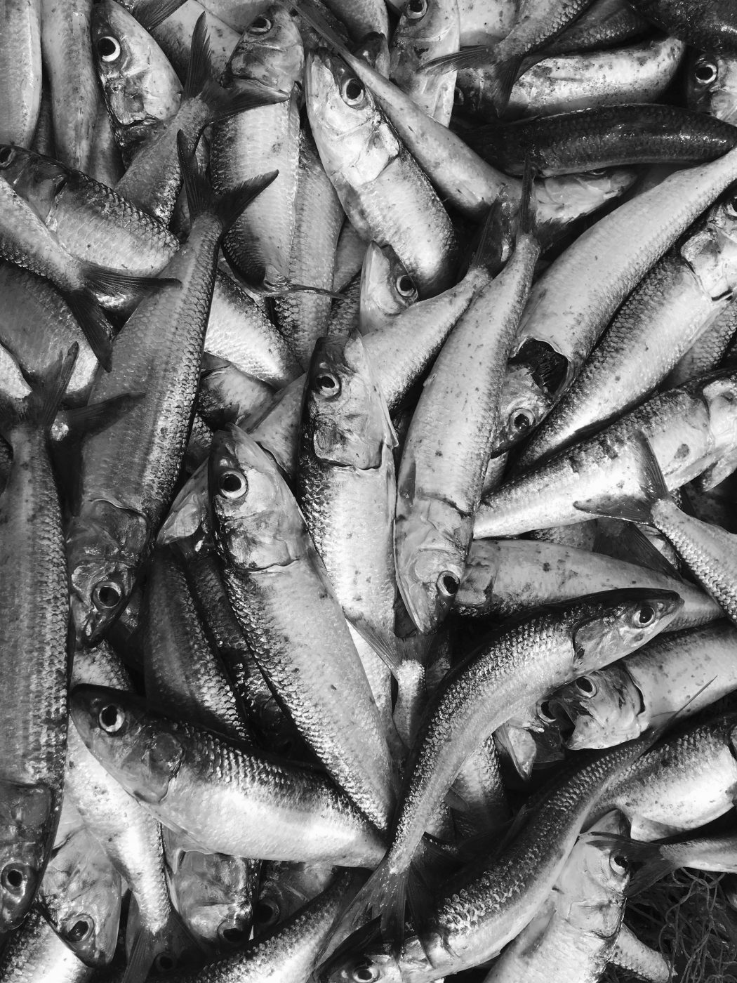 Conserved Fish: The Secret Weapon in the Arsenal of the Italian Cook