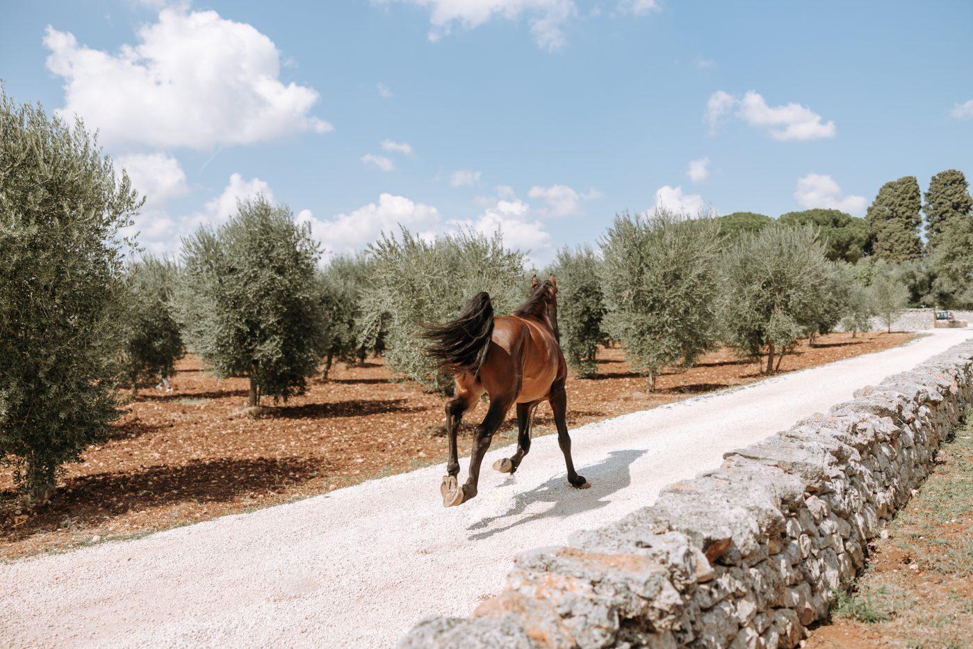 Masseria Lamacoppa - Puglia's essence, Ostuni