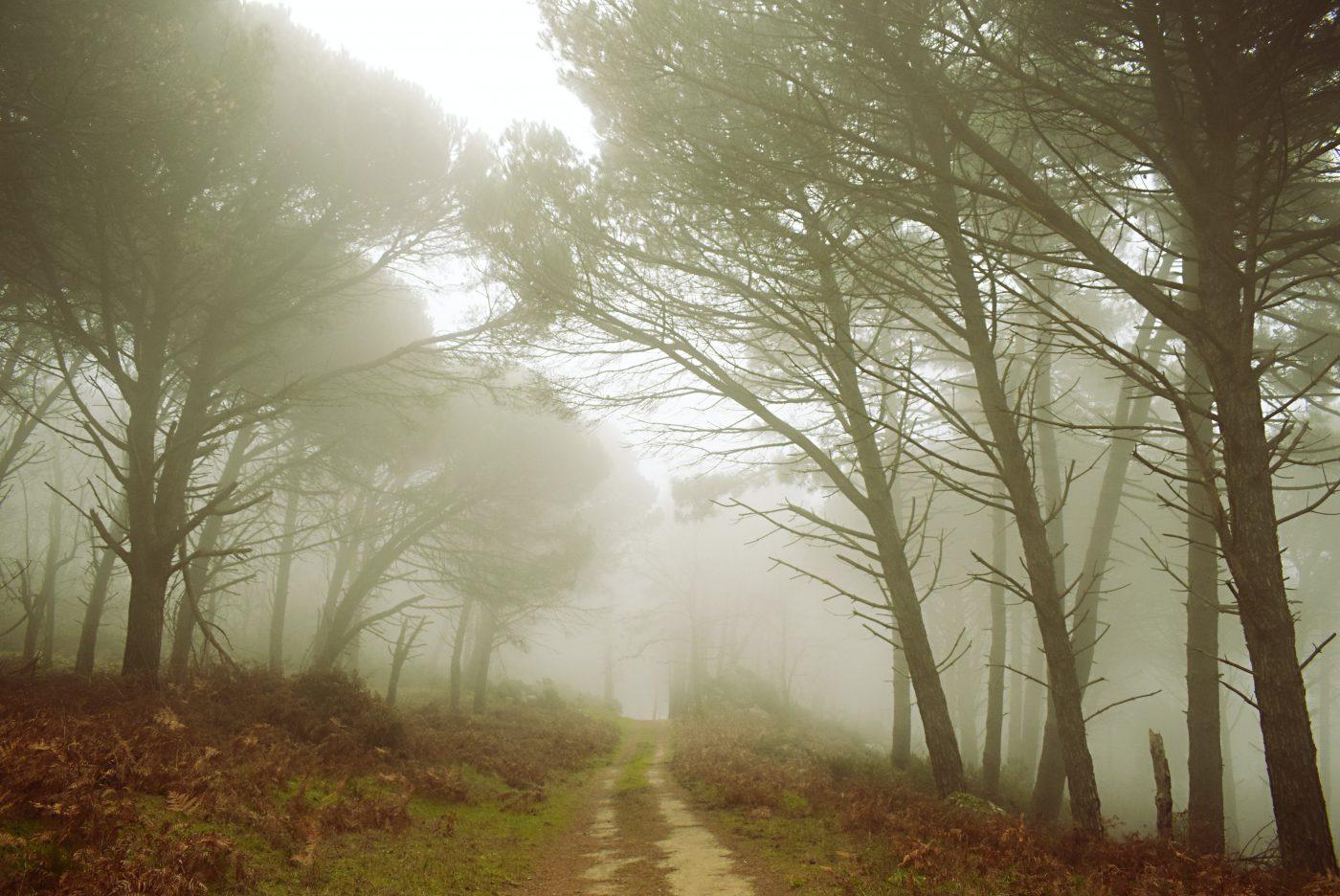 Isola d'Elba - Fiercely Wild